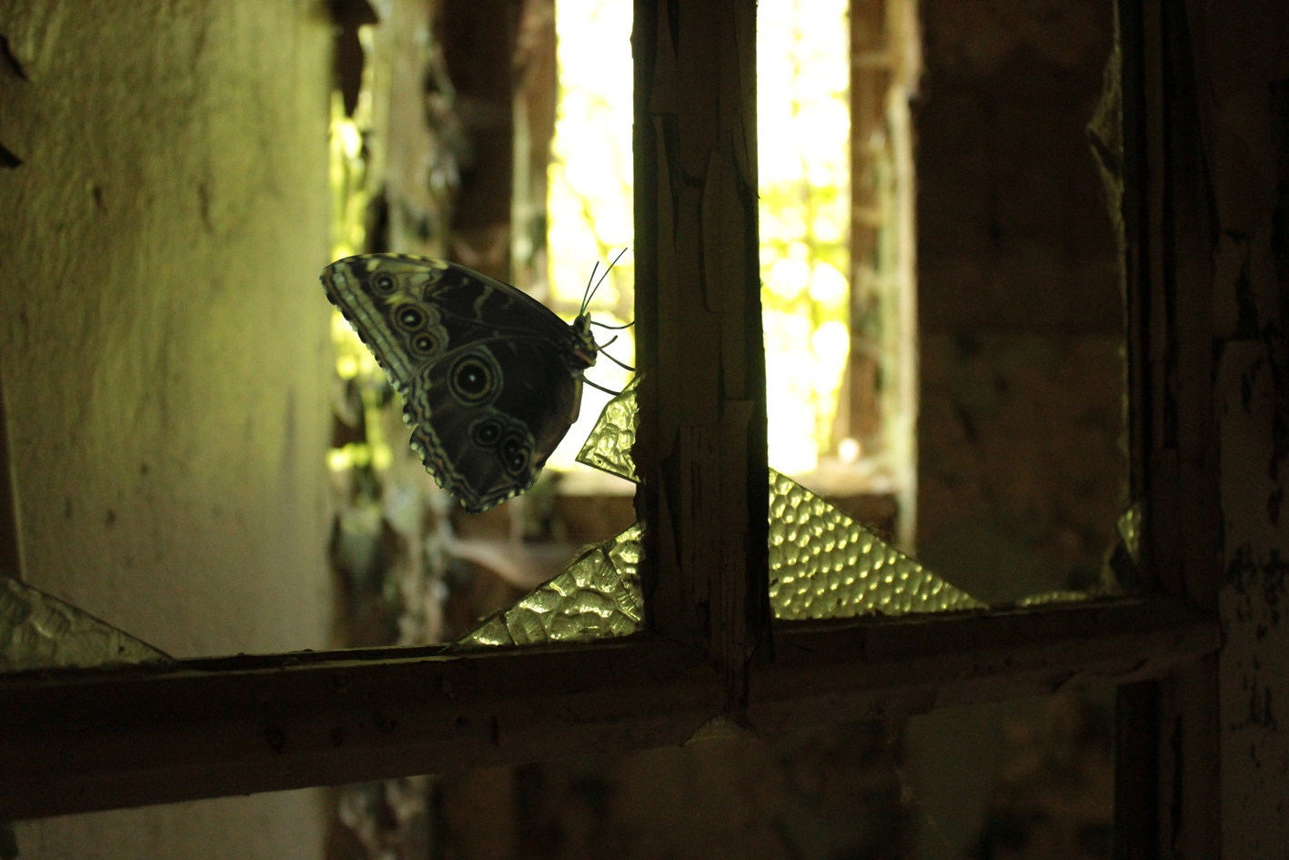 Lost Place mit Schmetterling