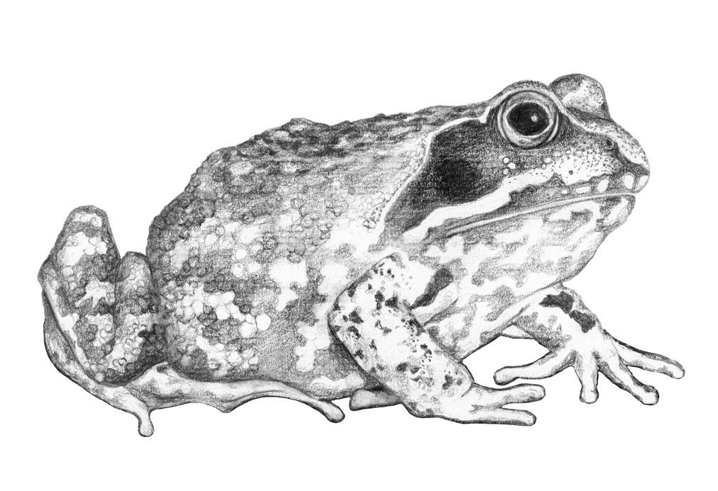 Grauer Frosch_Blog
