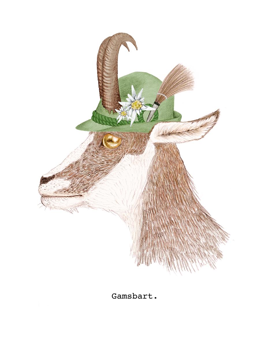 Gamsbart_koloriert_Blog