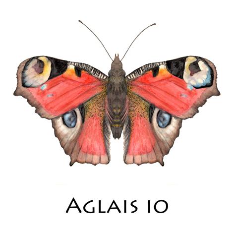 Tagpfauenauge_Aglais Io_Blog
