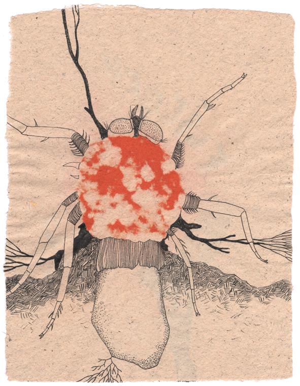 Fliegen-Pilz_01_Blog