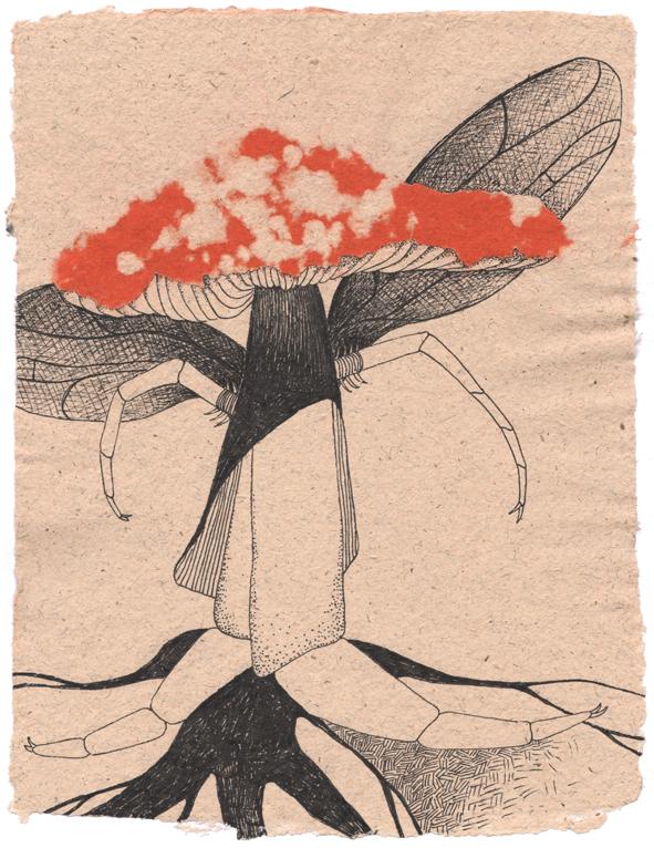 Fliegen-Pilz_03_Blog