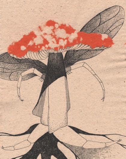 Fliegen-Pilz_03_Blog_Beitragsbild2